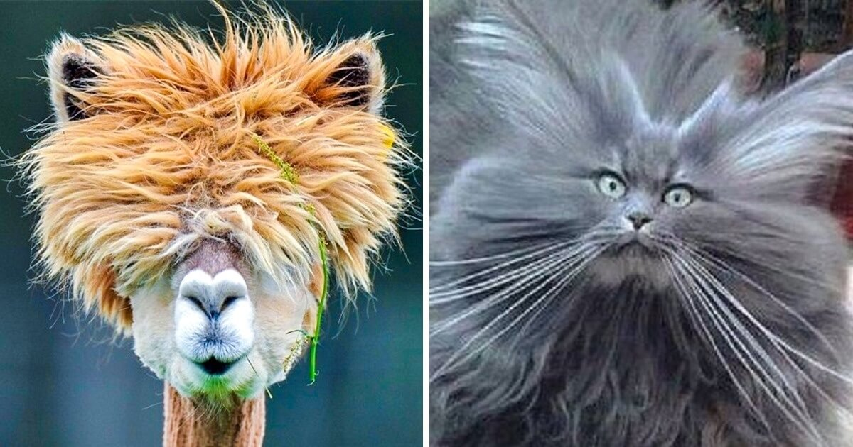 18 Animals Who Rocked Their Glorious Hairstyles Gifted by Nature