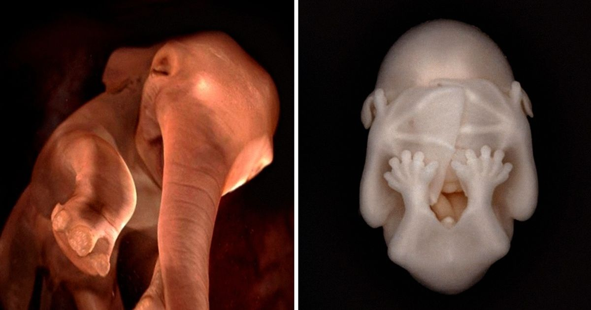15 utterly amazing photographs of animals in the womb